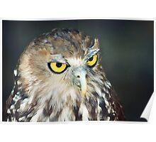 Australian Barking Owl Poster