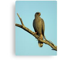 Dark Chanting Goshawk Canvas Print