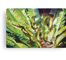 Birdsnest Canvas Print