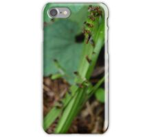 Ant Migration  iPhone Case/Skin