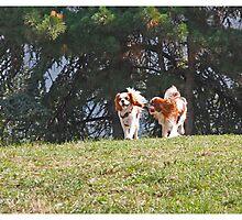 dogs (2) by Oksana Vlassenko