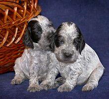 dogs (7) by Oksana Vlassenko