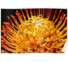 Flower Of Fire Poster