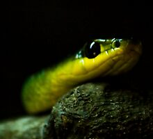 Slithering Snake by Chris Thornley