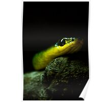 Slithering Snake Poster