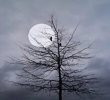 Moonlit Musings... by Nina Toulmin