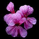 Raindrops by Andrew Dickman
