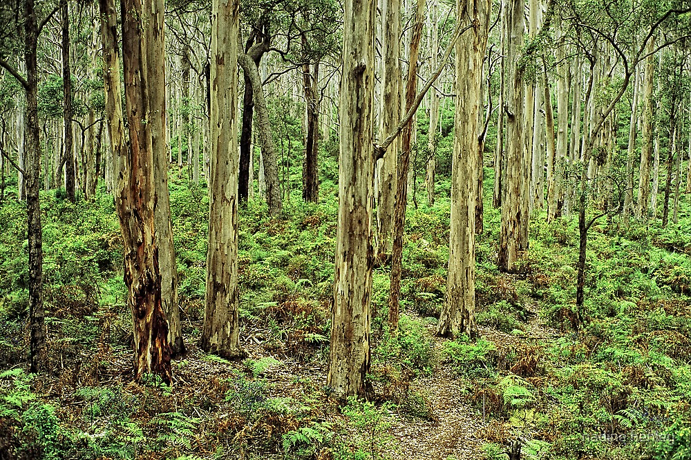 boranup forest 2 by nadine henley