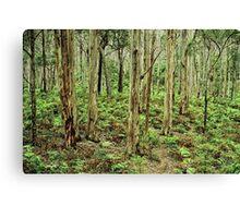 boranup forest 2 Canvas Print