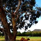 It's as simple as cows under a tree. by diLuisa Photography