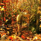 Deer by James  Birkbeck Animals