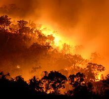The Burning Bush by gardenofbeeden