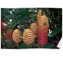 Beehive Ginger Cluster Poster