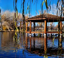 Pond at the Park by Chris Morrison