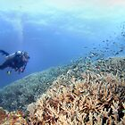 A reef with no name by gardenofbeeden