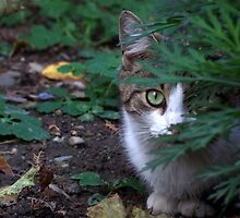 On the Prowl by Alex Boros