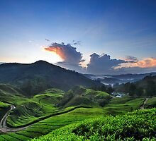 Cameron Tea Farm by Steven  Siow