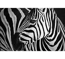 Natures graphic design Photographic Print
