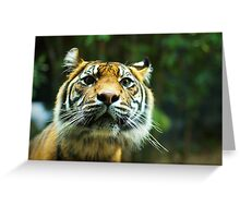 Here kitty kitty kitty Greeting Card