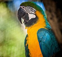 Macaw from Parque Das Aves by photograham