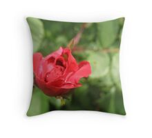 Red Starter Rose Throw Pillow