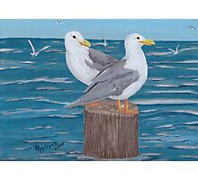 Seagulls ~ Oil Painting Photographic Print