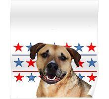 American Pitbull Terrier dog Poster