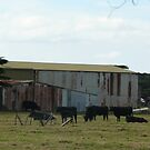 Farm, Werribee South by Joan Wild