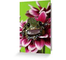 Peacock Tree Frog Greeting Card