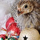A Guinea Fowl For Christmas by angelandspot