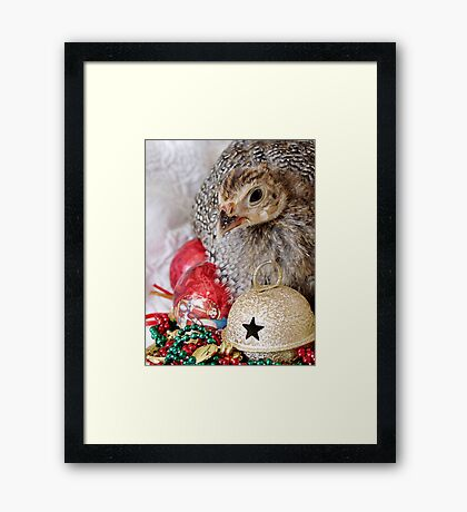 A Guinea Fowl For Christmas Framed Print