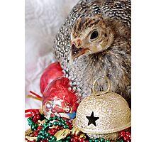A Guinea Fowl For Christmas Photographic Print