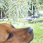 Leaf Kiss by Kyle Parkin