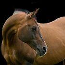 Horses by laurav