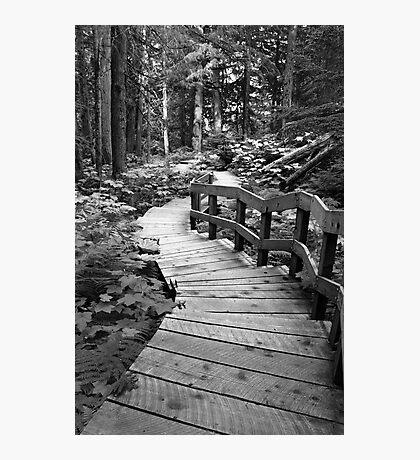 Boardwalk trail  Photographic Print