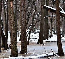 Frozen Wet Lands by Jarede Schmetterer