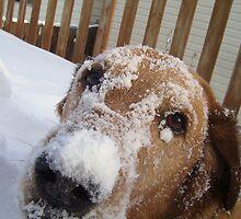 Snow Fun by Kyle Parkin