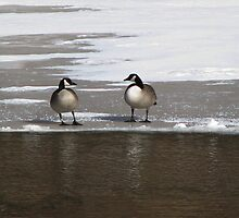 Two Geese by swaby