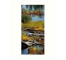 Algonquin Provincial Park Wetlands Art Print