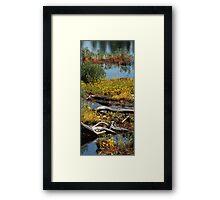 Algonquin Provincial Park Wetlands Framed Print