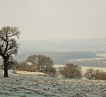 Wharfedale in Winter by WatscapePhoto