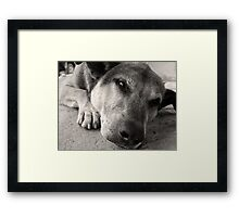 Cleatus - Argentina Framed Print