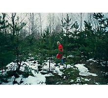 walk in-field among fir-trees Photographic Print