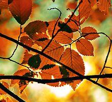 autumn,gold branch by Iuliia Dumnova