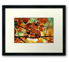 autumn,gold branch Framed Print