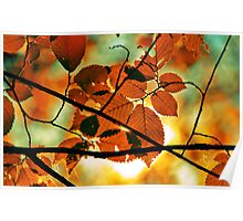 autumn,gold branch Poster