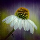 coneflower by KathleenRinker