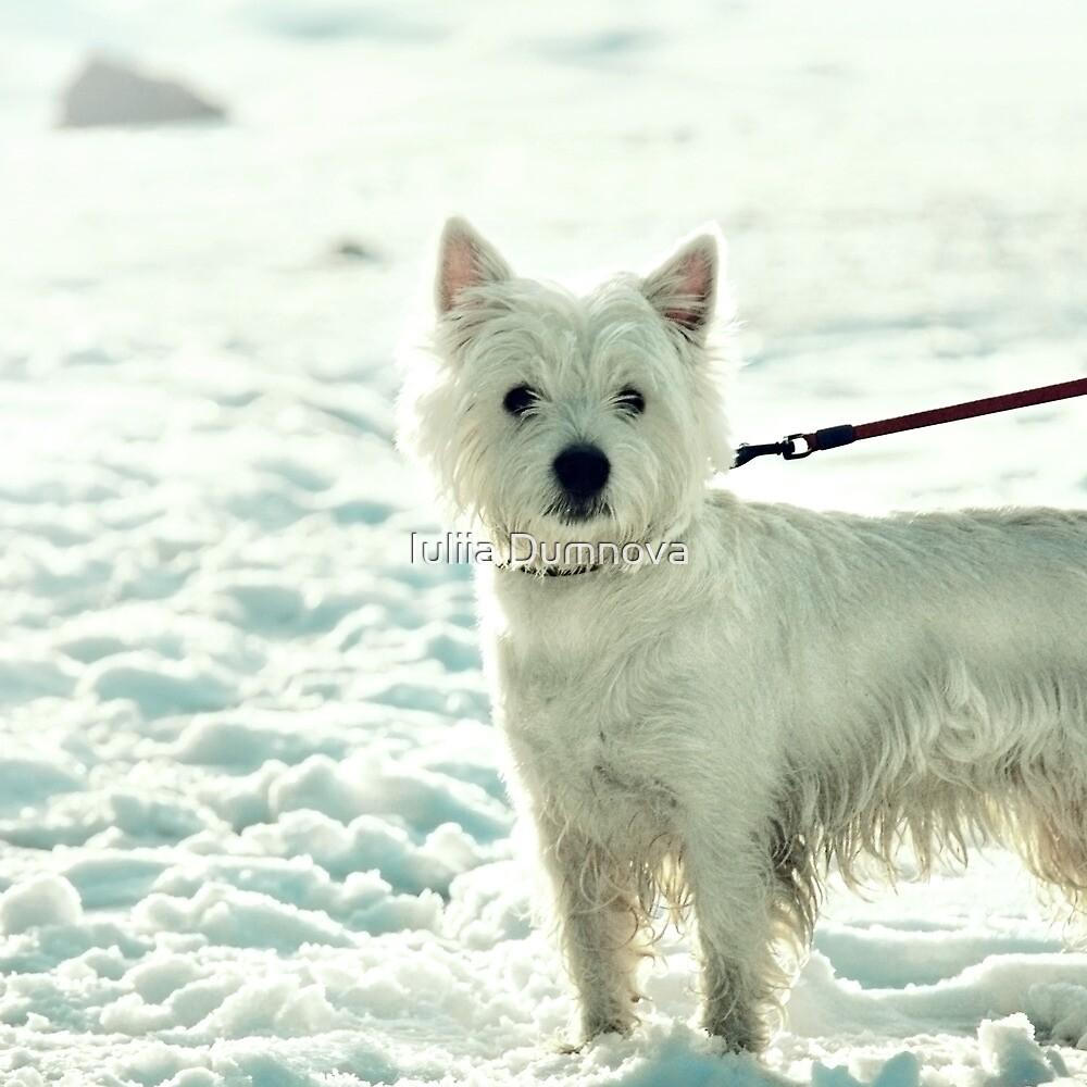half-dog by Iuliia Dumnova