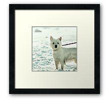 half-dog Framed Print