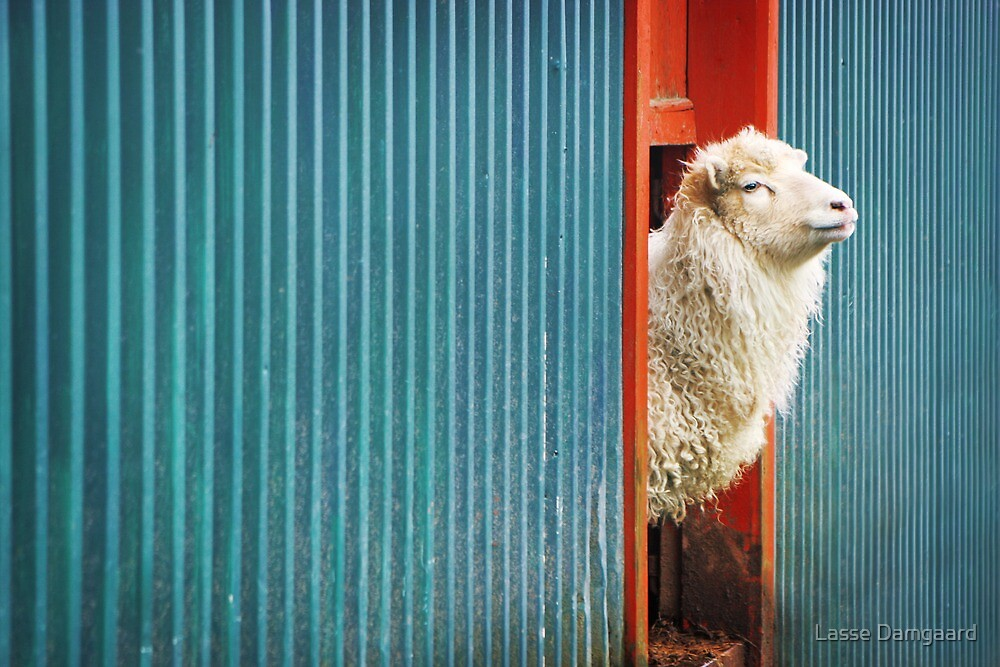 A Sheep Named DJ by Lasse Damgaard